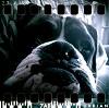 bulldog65